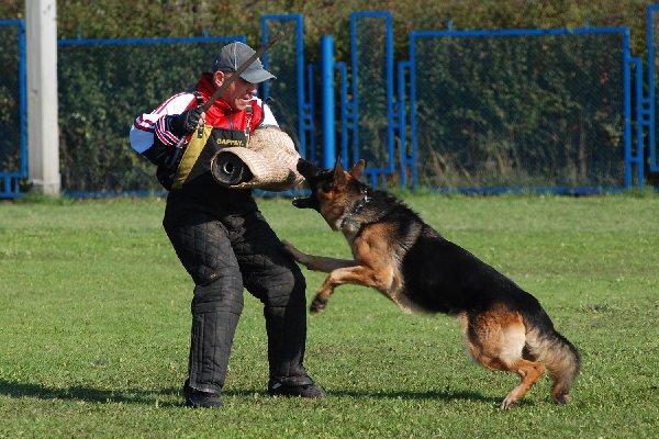 Dog training1