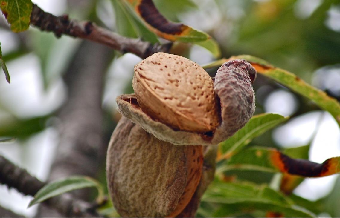 Финансовый план (бизнес-план) орехового бизнеса — Ореховод