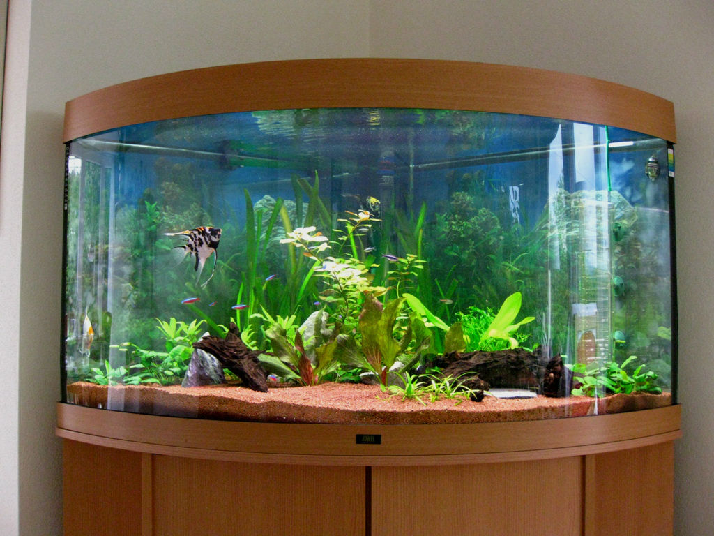 Business idea on earnings to aquarium fishes and plants