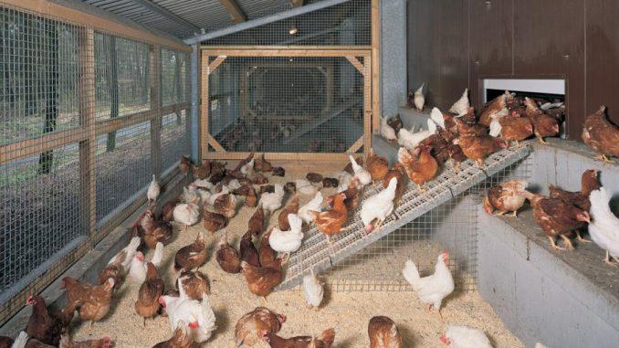 идеи бизнеса с нуля в японии Выращивание животных и птиц всегда считалось в России прибыльной отраслью экономики. Чтобы приступить к реализации этой идеи по животноводству, на выращивании куриц, а в дополнение открыть мясной магазин.С чего начать ·Разводим овец ·План по разведению куриц. Реальные бизнес идеи для села и деревни: разведение крупного рогатого при выращивании животных можно через полгода получить вкусное мясо. Что лучше разводить в деревне, 5 бизнес идей Существует заблуждение, что с нуля можно начать разведение любых животных и сразу выйти на (хотя их можно и совмещать) это выращивание на мясо и продажа поросят. </p> </div><!-- .entry-content -->  <footer class=