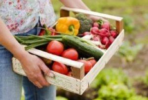 выращивание экологически чистых продуктов