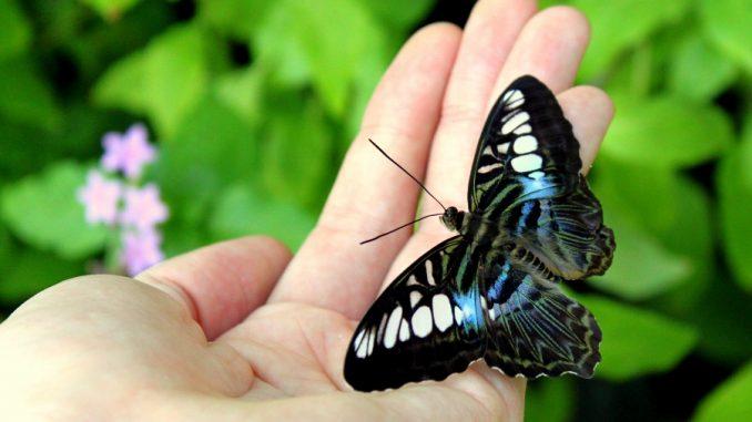 Разведение бабочек в домашних условиях как бизнес 876