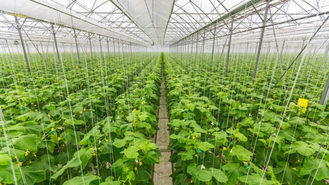 Бизнес идеи выращивание огурцов 30